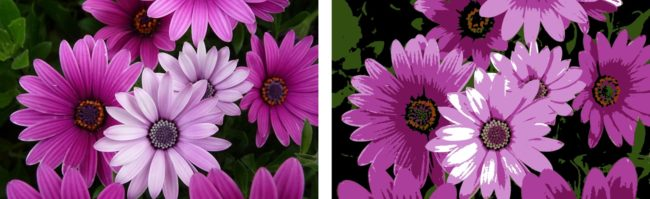 flower-photo-vector-conversion-scan2cad