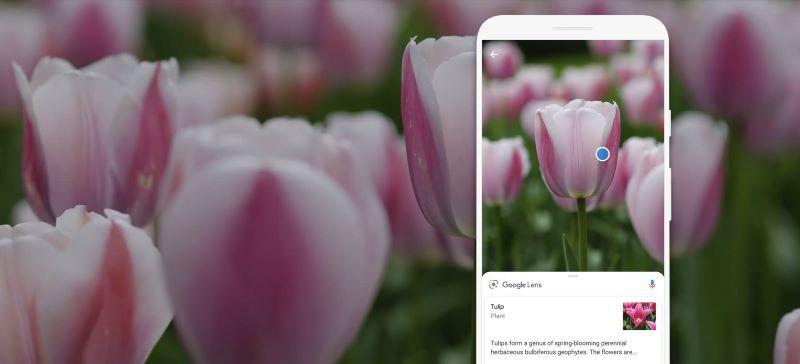 Google Lens Tulip